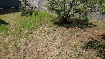 お庭の草刈りへ行ってまいりました。
